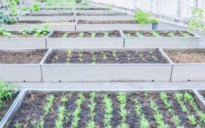 DC Urban Agriculture Small Grant Program